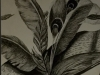 hannah -feather